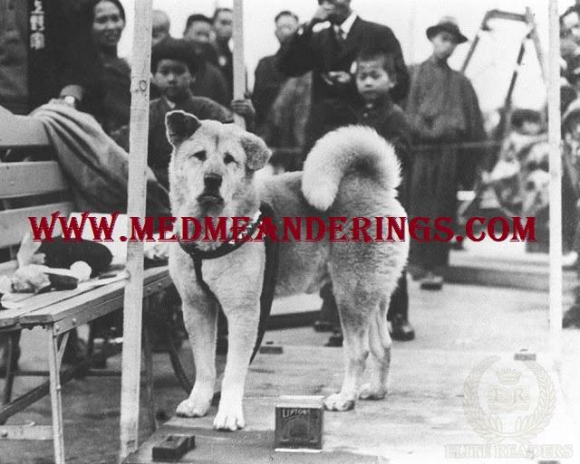Pelajaran Hidup Dari Hachiko Si Anjing Setia Asal Jepang